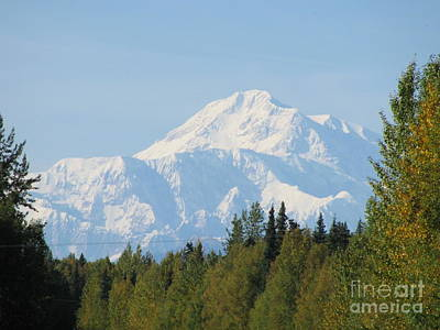 Denali Framed By Trees Art Print