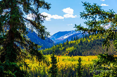 Photograph - Denali - Golden Valley 2 by Mary Carol Story