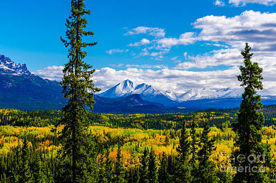 Photograph - Denali - Golden Valley 4 by Mary Carol Story