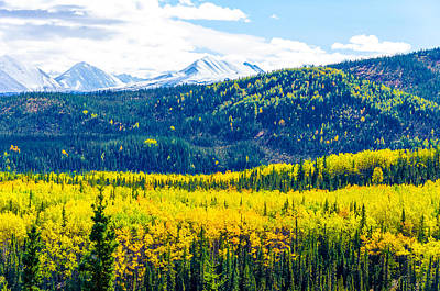 Photograph - Denali - Golden Valley by Mary Carol Story