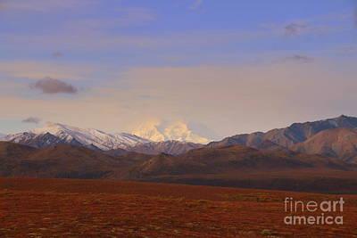 Photograph - Denali  by Lennie Malvone
