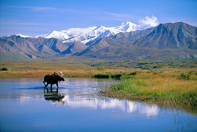 Photograph - Denali National Park by John Hyde - Printscapes