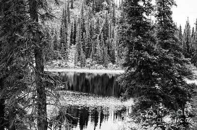 Photograph - Denali - Reflections In A Pond Bw by Mary Carol Story