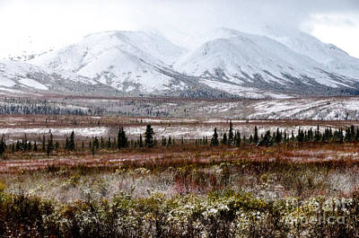 Photograph - Denali - Winter Came Early 2 by Mary Carol Story