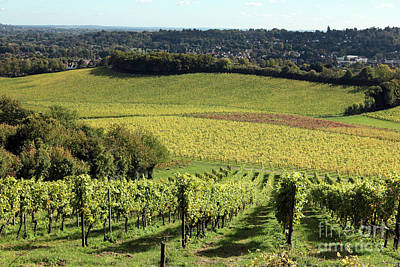 Photograph - Denbies Vineyard Dorking Surrey England by Julia Gavin