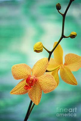 Colorful Leaves Photograph - Dendrobium by Allan Seiden - Printscapes
