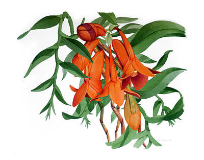 Samoan Painting - Dendrobium Mohlianum by Andy Atkins