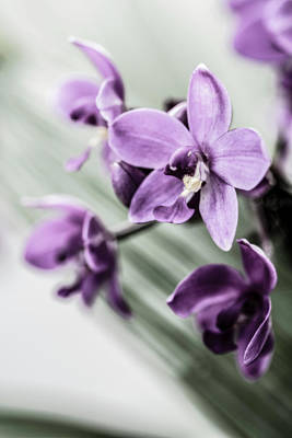 Photograph - Dendrobium Orchids by Tracy Winter
