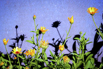 Photograph - Denim Sunshine by John Williams