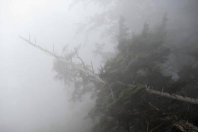 Photograph - Dense Fog by Robert Potts