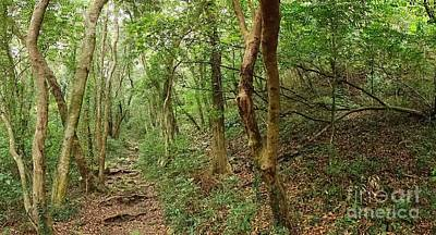 Photograph - Dense Green Forest With A Rugged Trail by Yali Shi