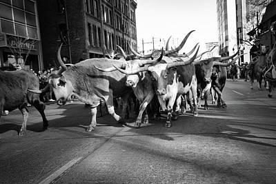 Digital Art - Denver National Western Stock Show Kick-of Parade 2018 Black And White by Lena  Owens OLena Art