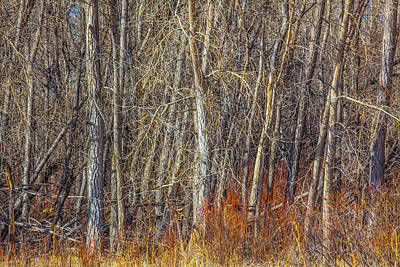 Photograph - Denver Woodland by David Hare