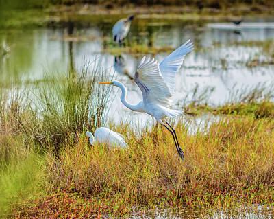 Ornithology Photograph - Departing by John M Bailey
