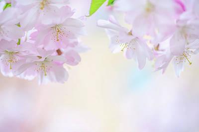 Photograph - Descending Deities. Spring Pastels by Jenny Rainbow
