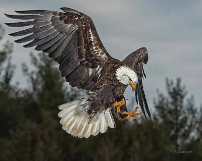Descending Eagle Art Print by CR  Courson