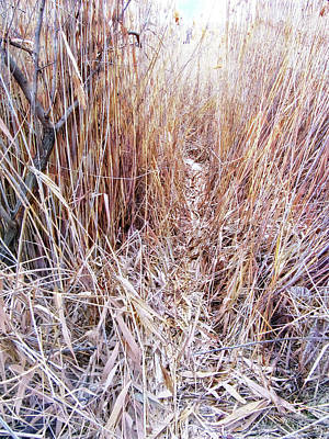 Photograph - Descent Into The Reeds by David King