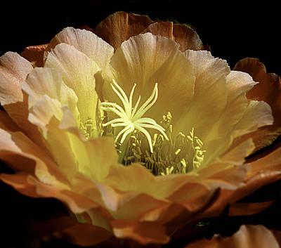 Photograph - Desert Apricot Glow 2 by Julie Palencia