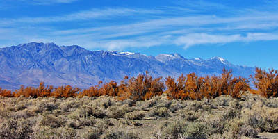 Photograph - Desert Autumn by Marilyn Diaz