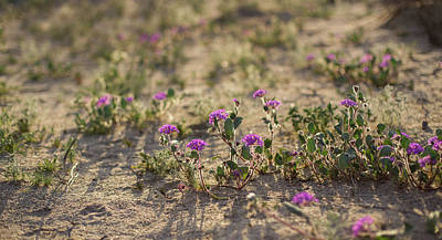 Photograph - Desert Beauties by Kunal Mehra