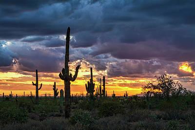 Photograph - Desert Beauty At Sunset  by Saija Lehtonen