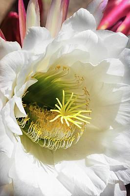Photograph - Desert Beauty In White  by Saija Lehtonen