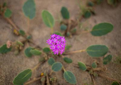 Photograph - Desert Beauty by Kunal Mehra