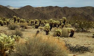Digital Art - Desert Beauty by Max DeBeeson