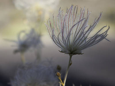 Wall Art - Photograph - Desert Bloom by Dana Crandell