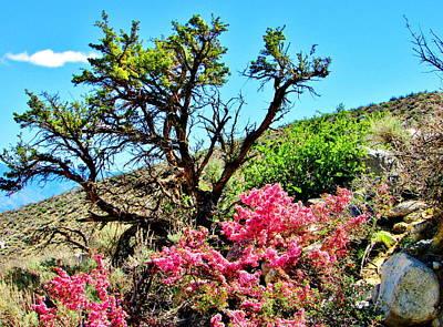 Photograph - Desert Bloom by Marilyn Diaz