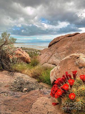 Photograph - Desert Bloom by Spencer Baugh
