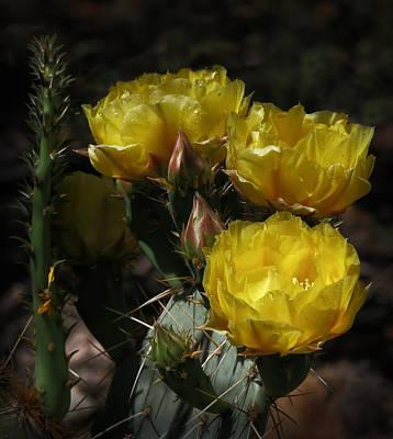 Desert Blooming Art Print by Elaine Malott