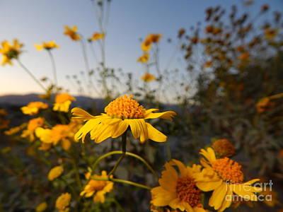 Photograph - Desert Blooms by Chris Tarpening