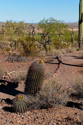 Photograph - Desert Blooms by Edward Peterson