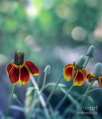 Photograph - Desert Blooms by Susan Warren