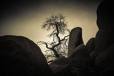 Photograph - Desert Bonsai by Sandra Selle Rodriguez