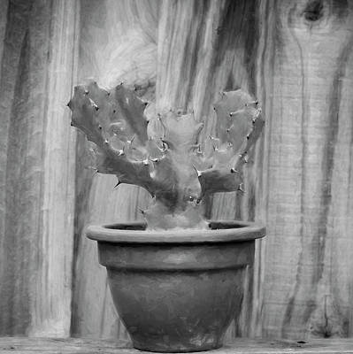 Photograph - Desert Cactus And Succulents 086 by Rich Franco