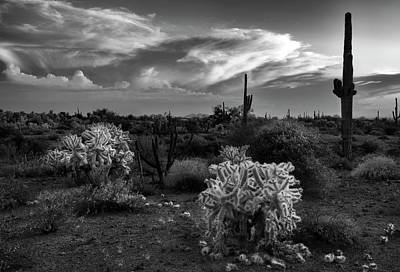 Stormy Photograph - Desert Cactus Black And White by Dave Dilli