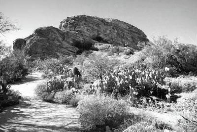 Photograph - Desert Cactus Rock by Andrea Hazel Ihlefeld