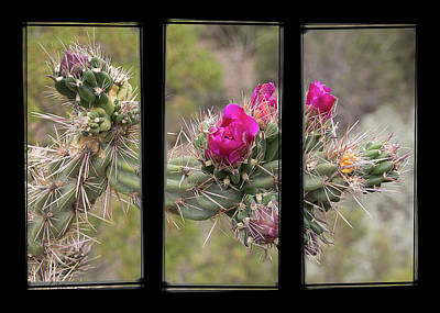 Photograph - Desert Cactus Triptych by Patti Deters