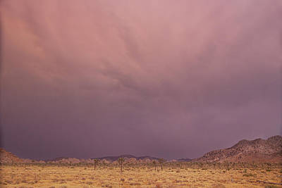 Photograph - Desert Colors by Kunal Mehra