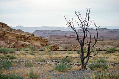 Photograph - Desert Colors by Margaret Pitcher