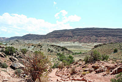 Photograph - Desert Colors by Susan Herber