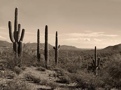 Desert Companions Art Print