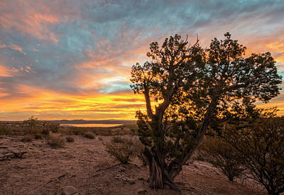 Photograph - Desert Dawn by Loree Johnson