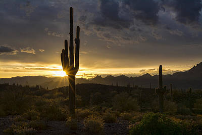 Photograph - Desert Dawn On The Horizon  by Saija Lehtonen