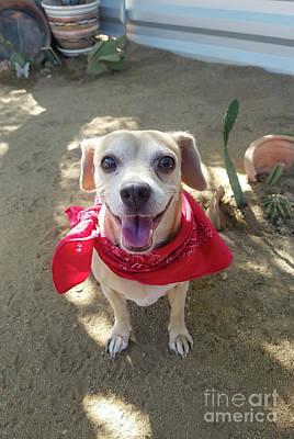 Photograph - Desert Dog by Angela J Wright