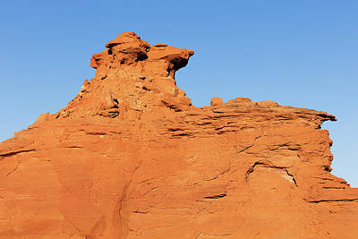 Photograph - Desert Dog by Tom Daniel