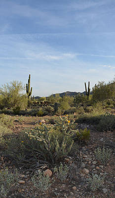 Park Photograph - Desert Dream by Aimee L Maher Photography and Art Visit ALMGallerydotcom