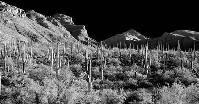 Photograph - Desert Dream by Scott Rackers